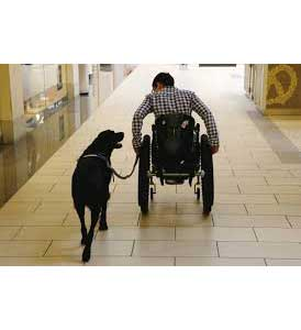 service dogs for vets with ptsd